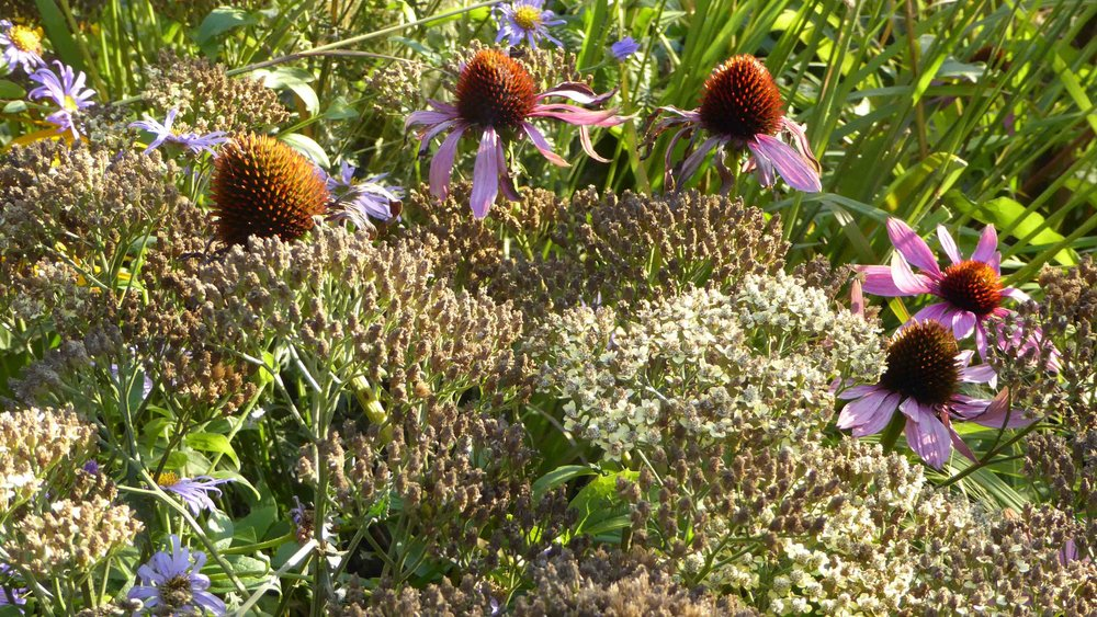 Cheshire Garden Design: The Sun and Shade Garden: Echinaceas And Grasses