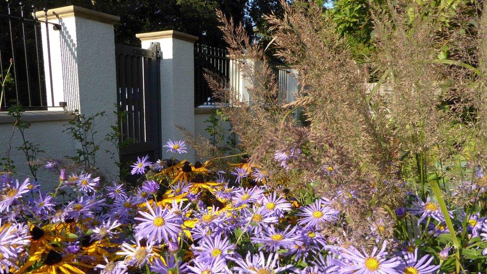 Cheshire Garden Design: The Sun and Shade Garden: Rudbeckia, Aster and Grasses