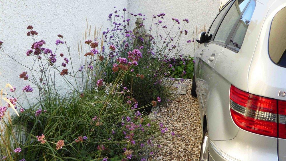 Cheshire Garden Design: The Sun and Shade Garden: Drive and Perennial Border With Verbena bonariensis