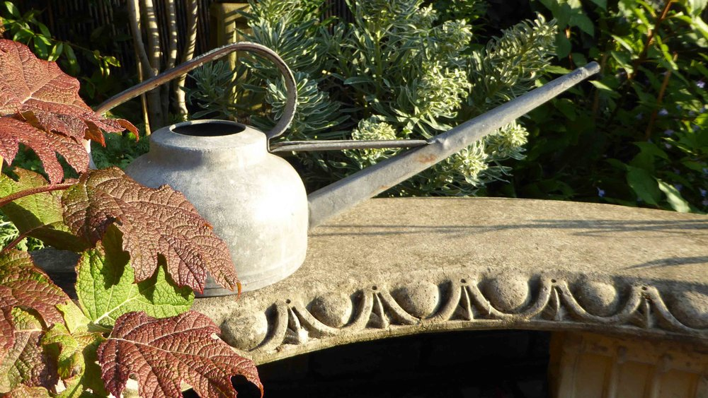 Cheshire Garden Design: The Sun And Shade Garden: Watering Can On Bench with Hydrangea quercifolia