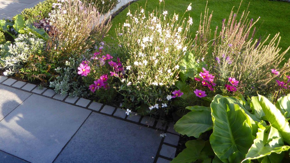 Cheshire Garden Design: The Sun And Shade Garden: Perennial Border And Path