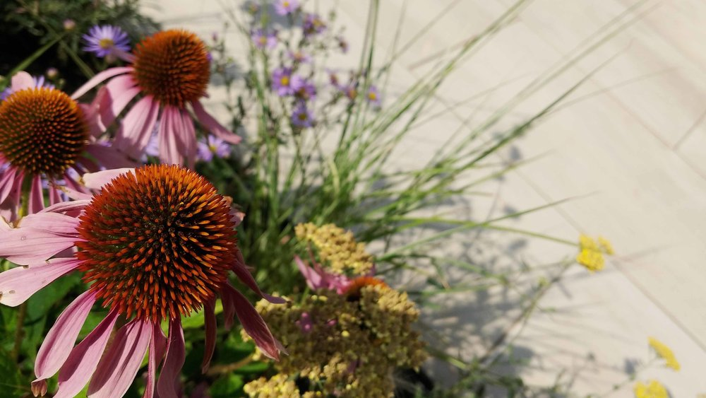 7 planting view.jpg
