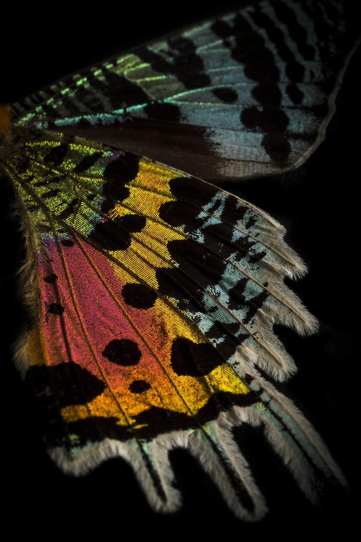 0065_Butterfly 092015-3110.jpg