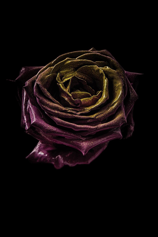 0066_Flower 092015-0761.jpg