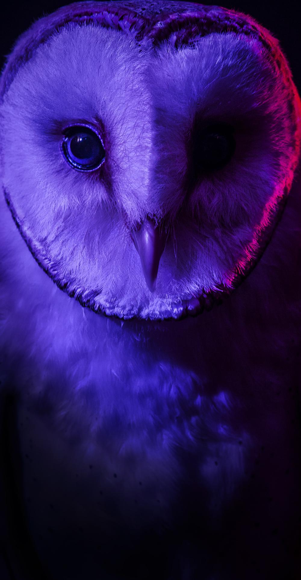Owl (DoeZoo)