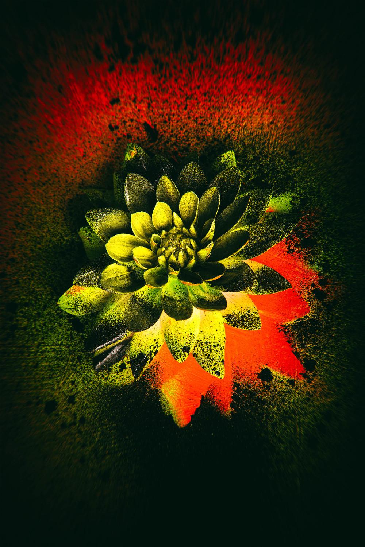 0008_Flower-07092015-0609.jpg