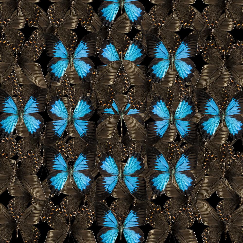 0038_butterfly-4-nov2015.jpg