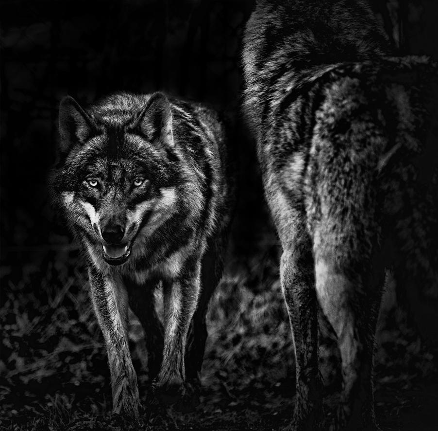 0064_Wolf-mei2012-0533.jpg