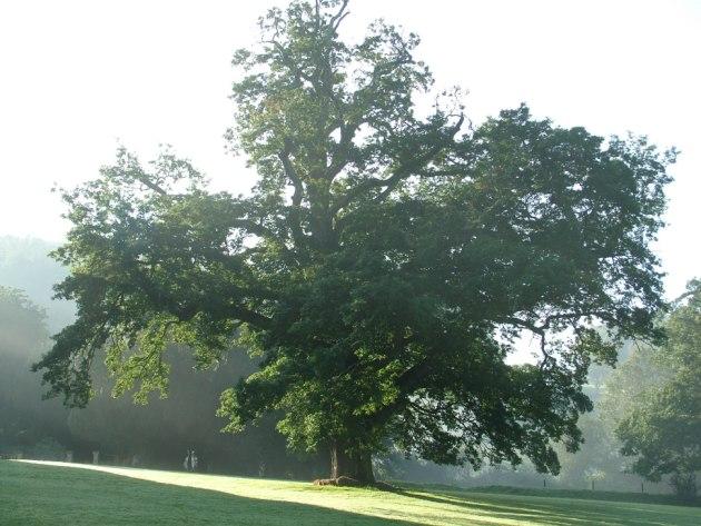 the-healing-tree.jpg