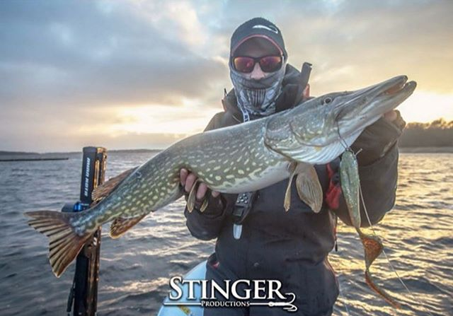 World class pike hunter delivers again @fredrikrenz #ozolot #renzsteinlures