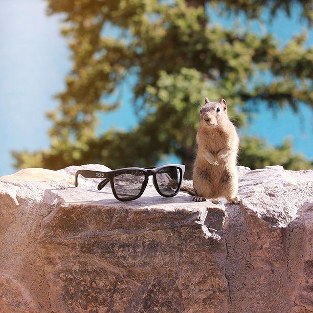 #Ozolot and friends 🐿  #NoPhotoshop #NatureSurprise