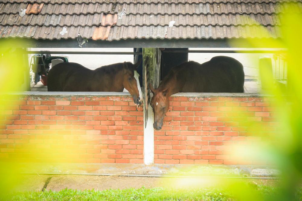Horses at Rider's Cafe11.jpg