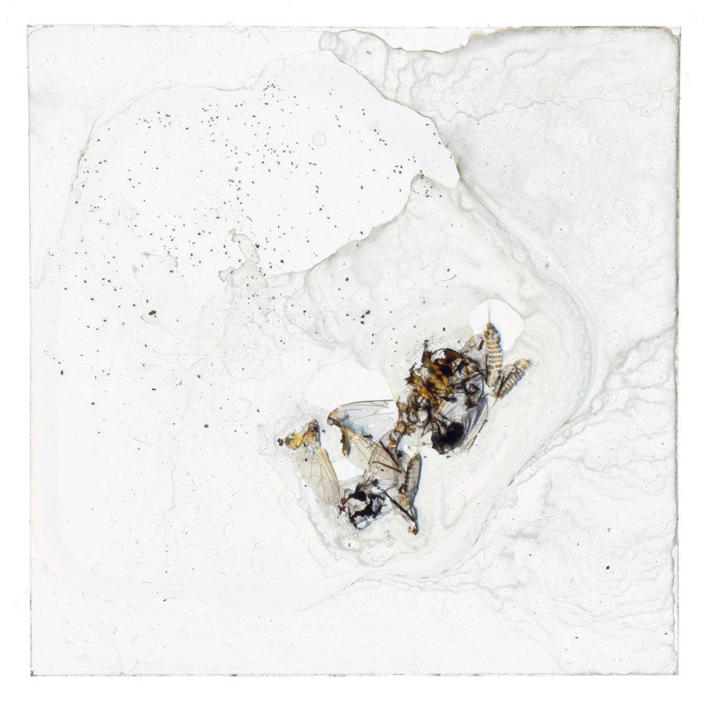 Christophe-Guye-Galerie-Brigitte-Lustenberger-BUGS-UNKNOWN-XXVIII.jpg