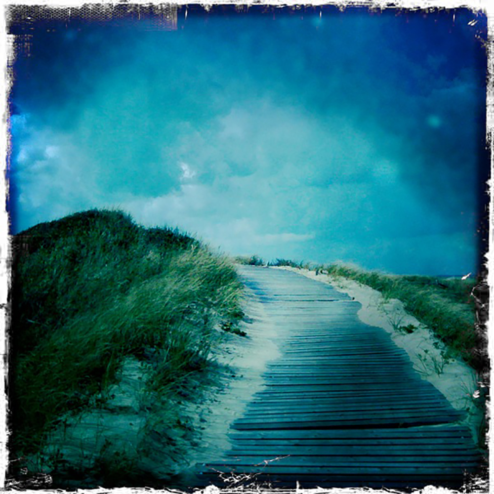 Dunes, Martha's Vineyard