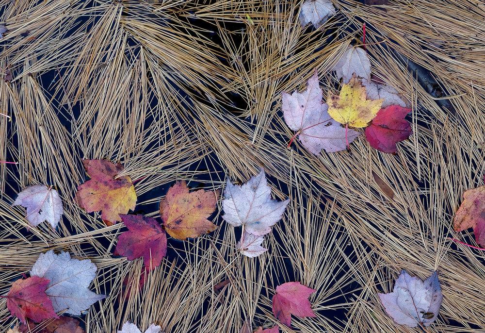 Fall Leaves Afloat