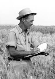 Borlaug.jpg