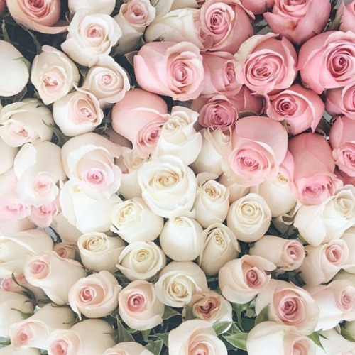 How To Use Rose Floral Water To Improve Your Skin Kismet Essentials