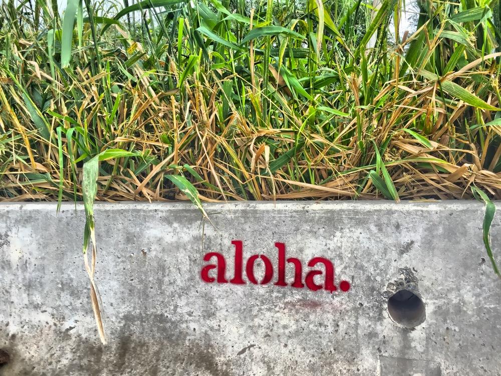 Oahu, 2015