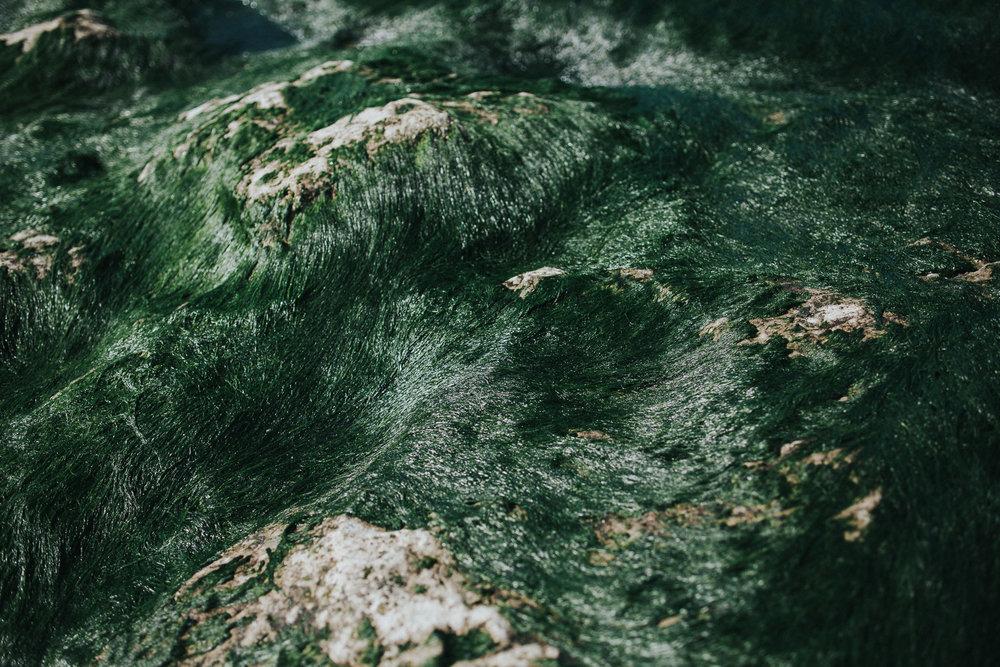 Seaweed at the beach of Praia da Aguda