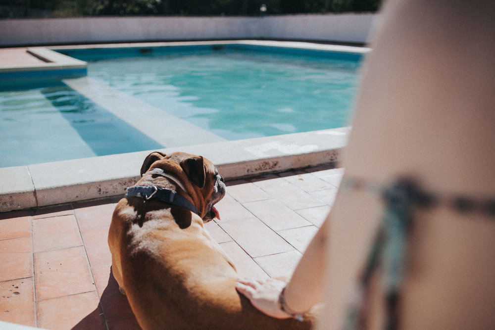 Dog at the poolside