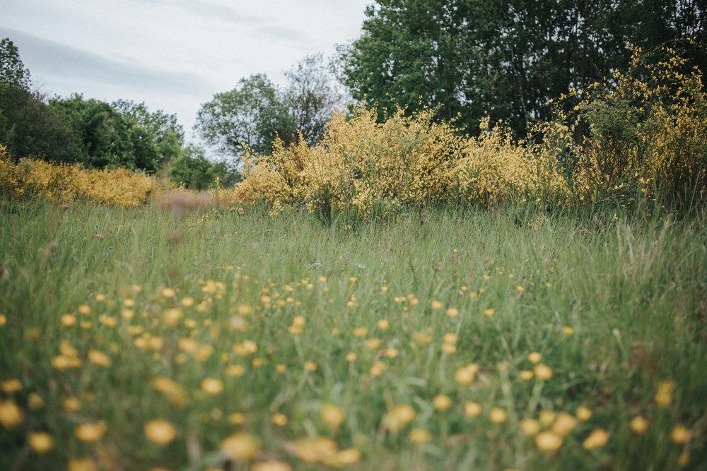 Grüne Wiese mit gelben Blumen