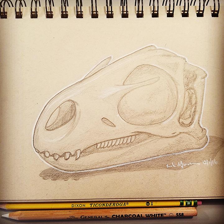 14 Nanosaurus