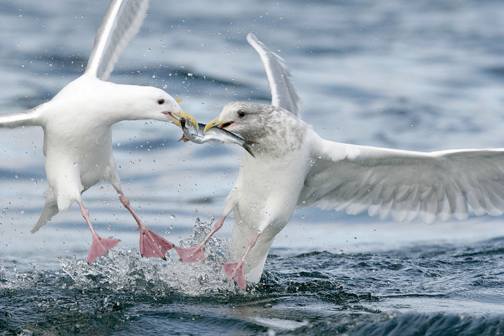herring run 02.jpg