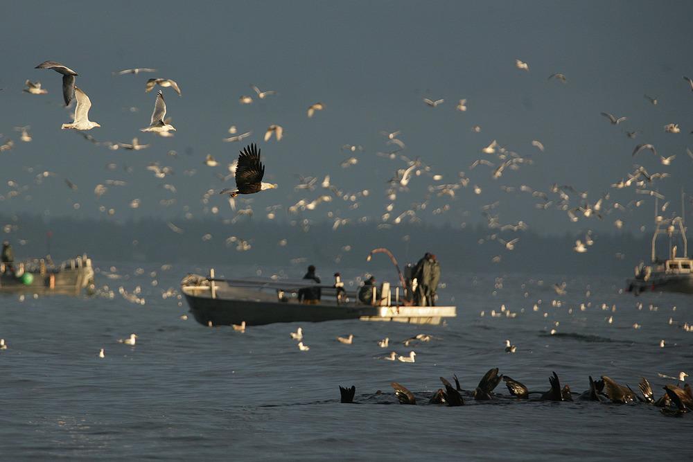 herring run.jpg
