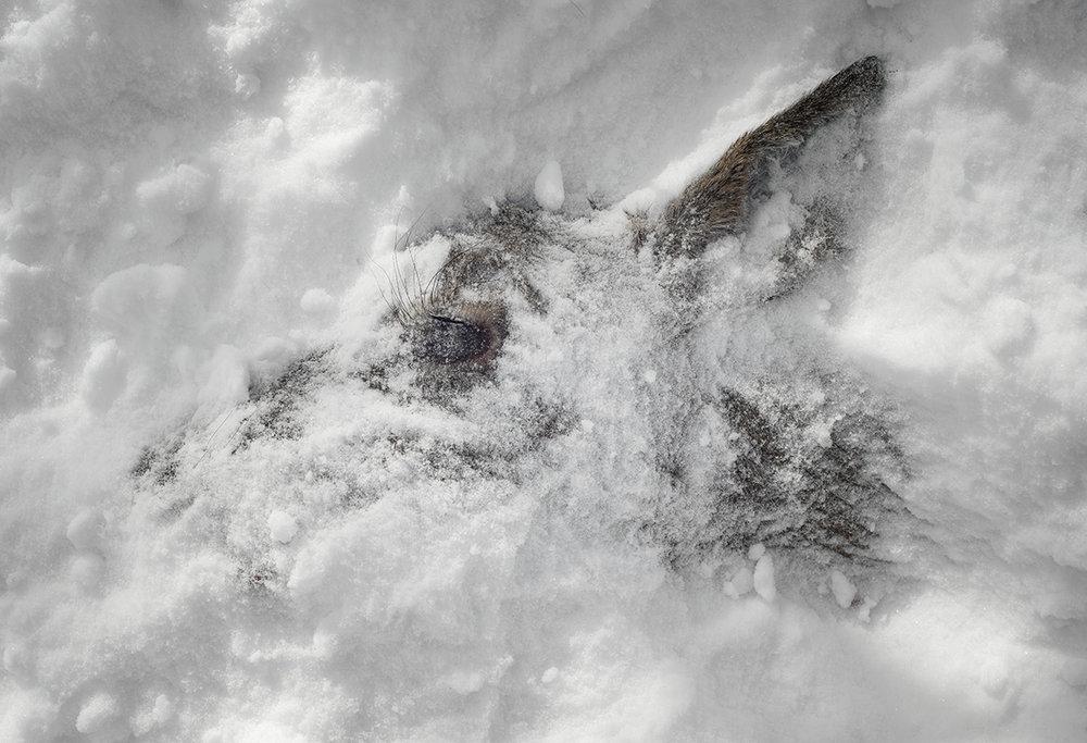 Nightlife (chevreuil, janvier)  impression au jet d'encre  53 x 73 cm