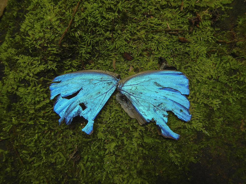 Nightlife (ailes)  impression au jet d'encre  38 x 48 cm
