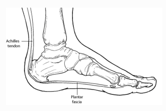 Image from https://www.foothealthfacts.org/conditions/heel-pain-(plantar-fasciitis)