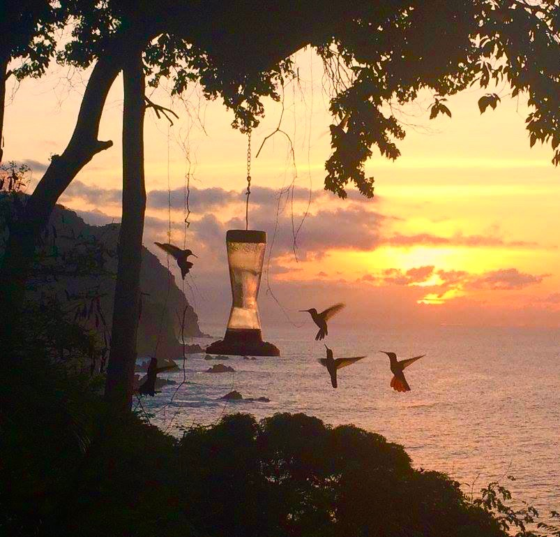 Hummingbirds, Tobago