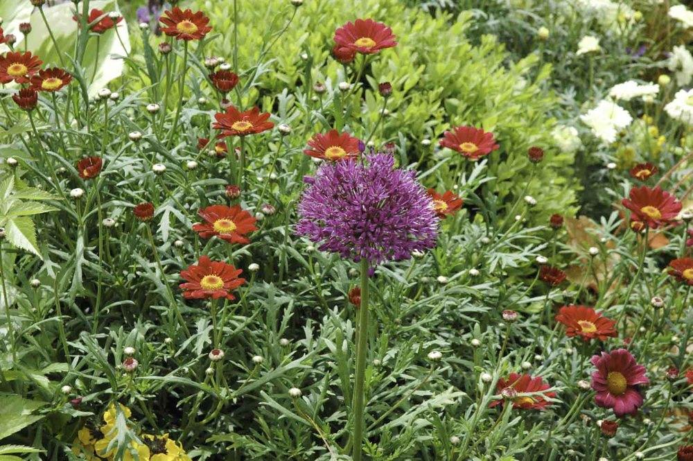Jack Dunckley RHS Flower Show 2009 Malvern Spring - 4.jpg