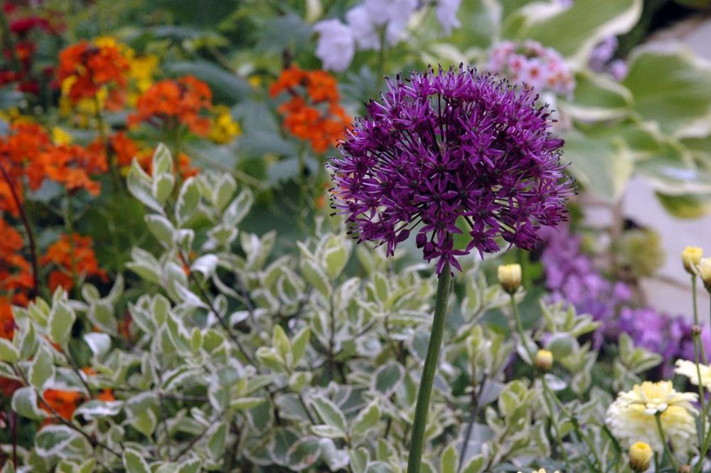 ©Jack Dunckley Award Winning Landscape Designer RHS Flower Show 2009 Malvern Spring-4.jpg