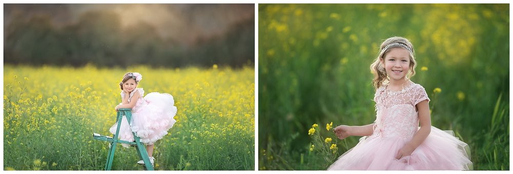 Sonoma County mustard flower photos - angelika mitchell photography
