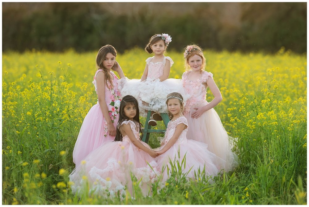 sonoma county mustard flowers photo session- angelika mitchell photography