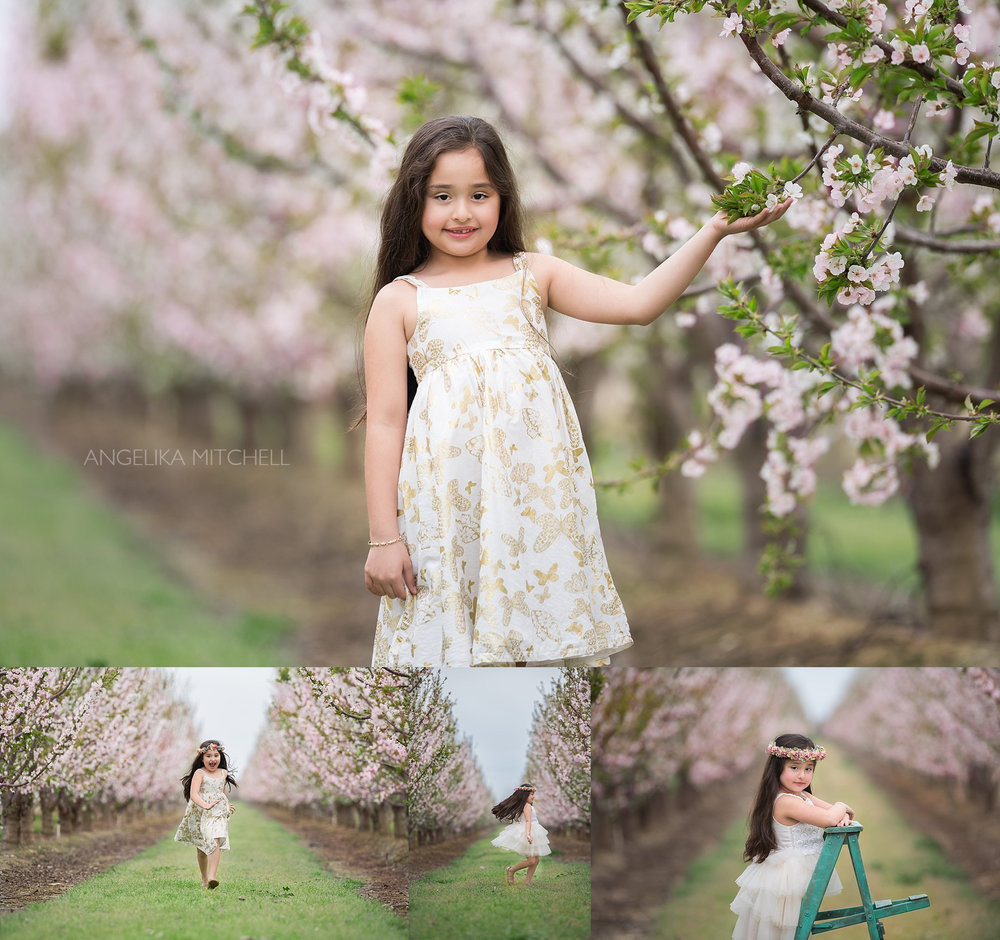 Cherry Blossom Portrail- Angelika Mitchell Photography- Santa Rosa