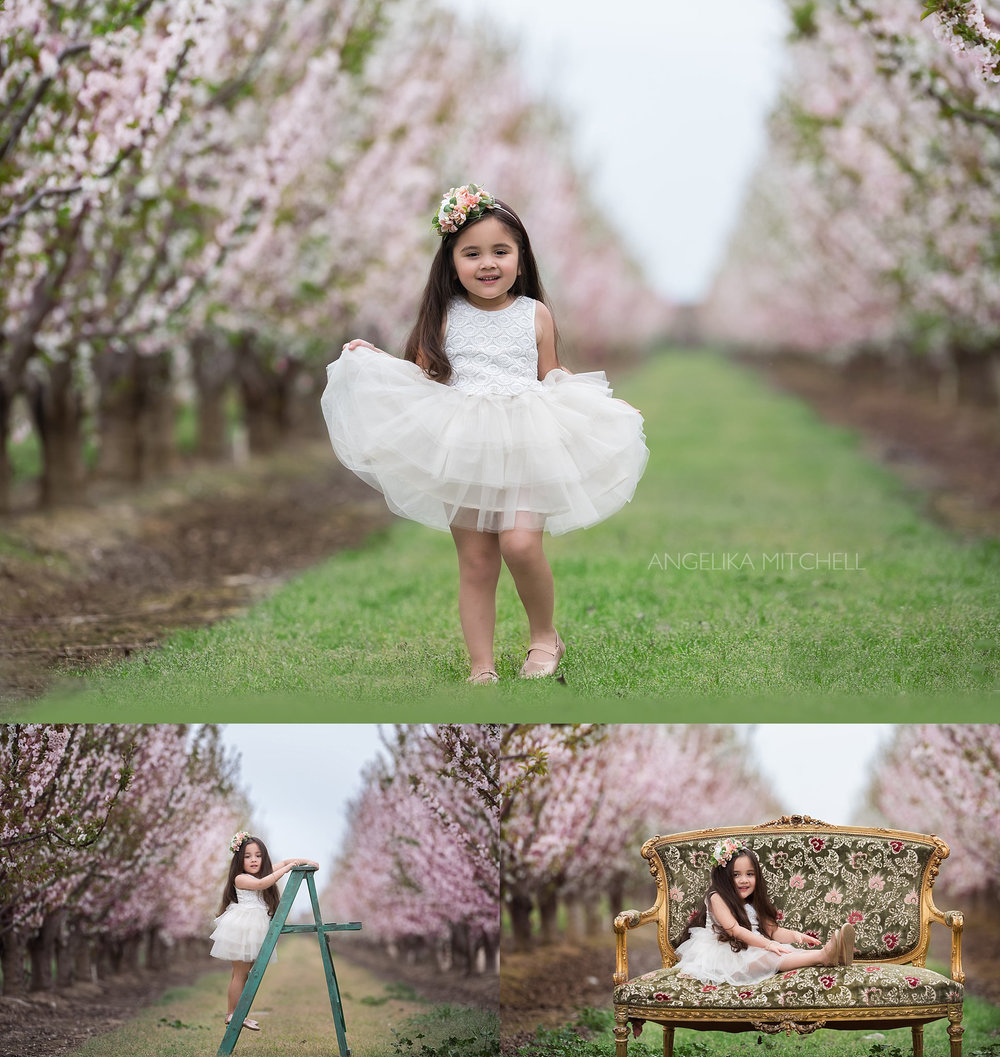 Santa Rosa Child Photographer Angelika Mitchell- Cherry Blossoms