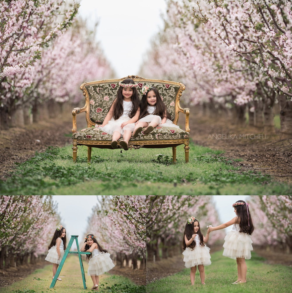 Sonoma County Photographer Angelika Mitchell- Cherry Blossoms