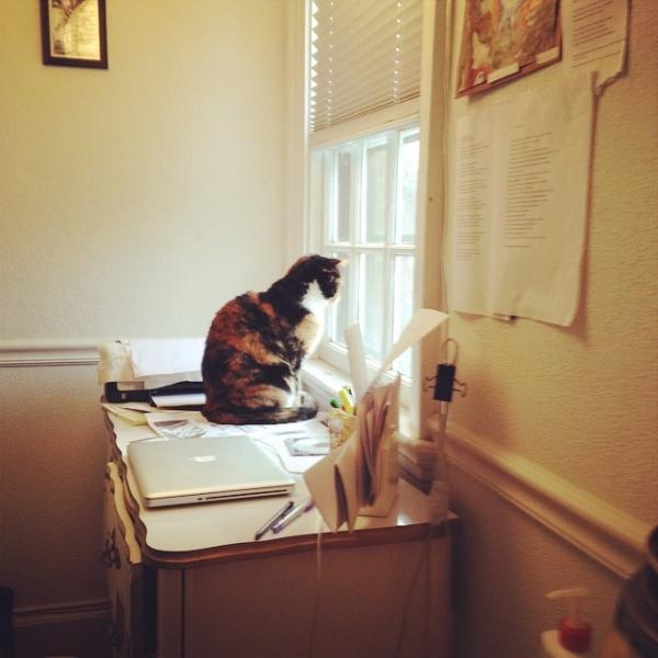 Stevens on desk.jpg
