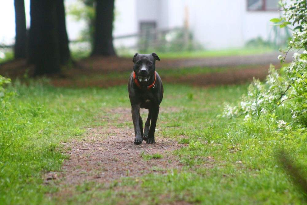 Photo courtesy of Eva's Play Pups Countryside Dog Camp
