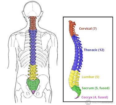 Overview-of-the-Different-Parts-of-the-Vertebral-Column-1.jpg