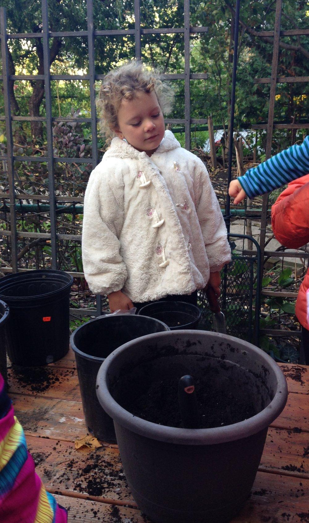2016 tulip planting charlotte IMG_7228.jpg