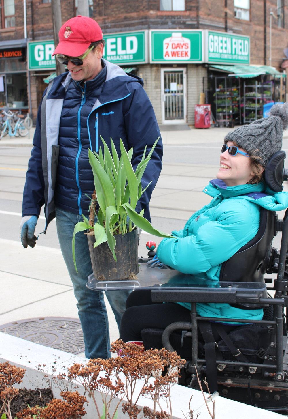 2017 tulip Kristen David plant IMG_4670.jpg
