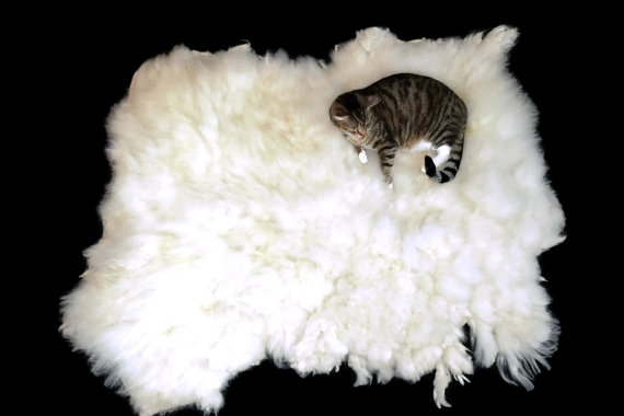ALL PHOTO CREDIT TO ETSY AND CATS LOVE EWE