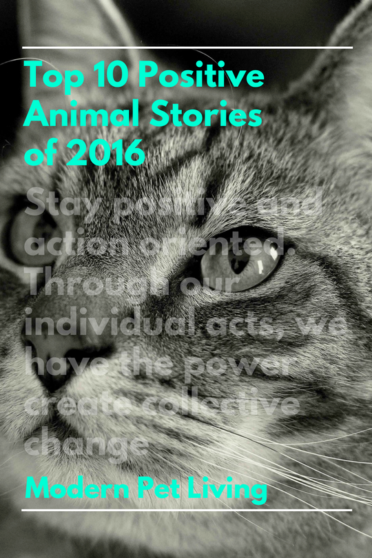 Positive Animal Stories 2016