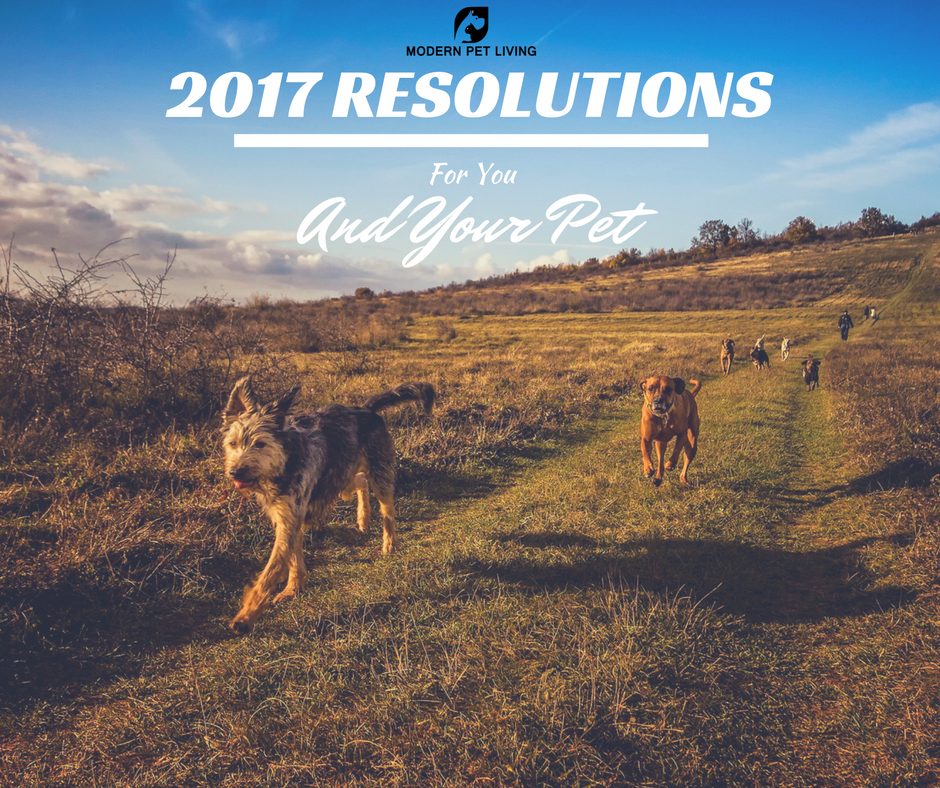 2017 Resolutions - For You And Your Pet - Modern Pet Living