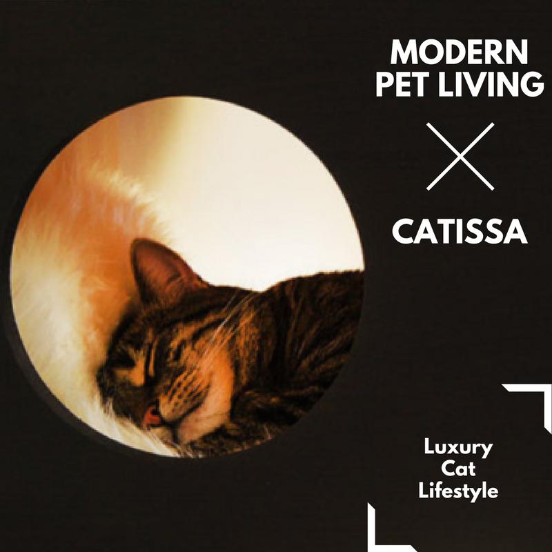 modern_pet_living_catissa_cat_lifestyle