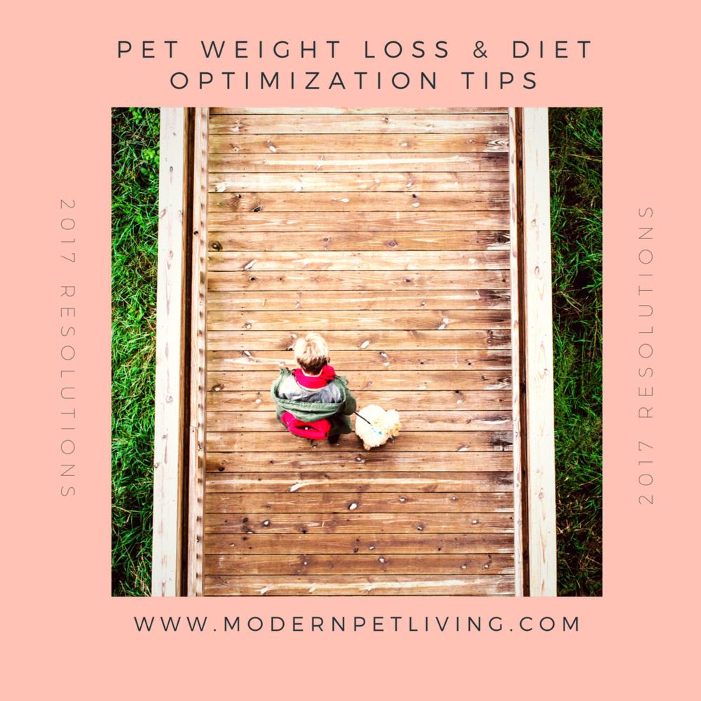 Pet Weight Loss Modern Pet Living.png