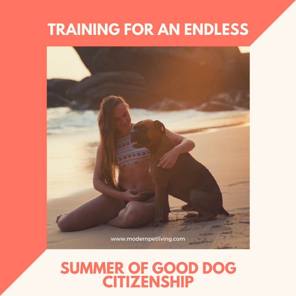 Training For An Endless Summer of Good Dog Citizenship.png
